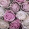"""Салфетка для декупажа SVD86004 """"Нежные розы"""", 25х25 см, Sagen Vintage Design, Норвегия"""