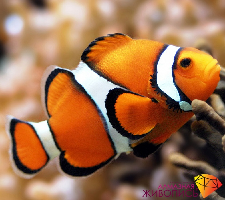 Картина стразами Рыбка клоун Алмазная живопись