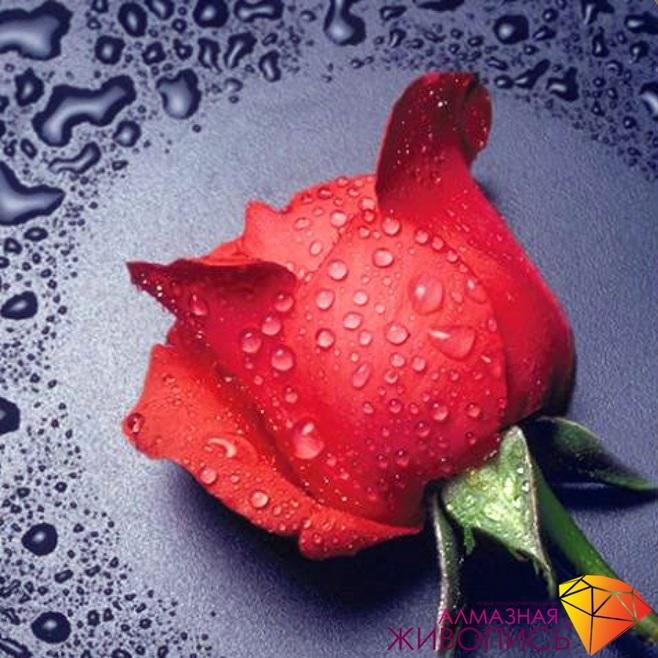 Картина стразами Красная роза Алмазная живопись