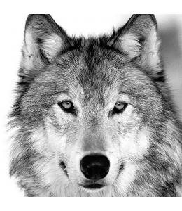 "Салфетка для декупажа ""Волк"", 33х33 см, Голландия"