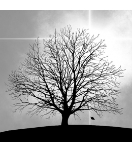 "Салфетка для декупажа ""Дерево"", 33х33 см, Голландия"