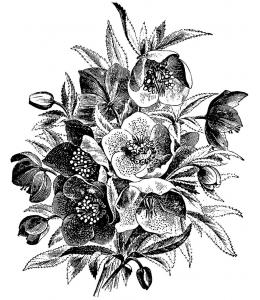 Штамп силиконовый на полимерном блоке LB1060 Christmas rose, 10x8,5 см, La Blanche