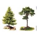 Рисовая бумага для декупажа 160618 Деревья, А4, Бижу-Мастер, Россия