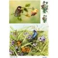 Рисовая бумага для декупажа 160623 Полевые цветы и птички, А4, Бижу-Мастер, Россия