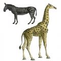 """Переводная карта, трансфер Cadence CD-822 """"Зебра и жираф"""", 12х17 см"""