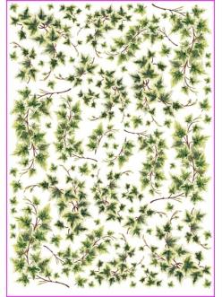 Рисовая бумага для декупажа Calambour Pau-019 Плющ, 35х50 см