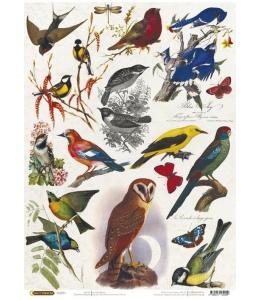 """Рисовая бумага CP04259 """"Птички"""", 28,2х38,4см, Craft Premier (Россия)"""