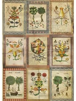 Рисовая бумага для декупажа Средневековая ботаника,21x29,7см Craft Premier