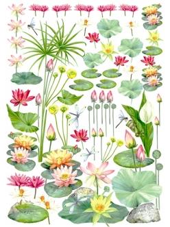 Декупажная карта Esprimo Ferrario № 16, Водные цветы, кувшинки и лотосы