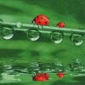 """Салфетка для декупажа """"Божьи коровки на веточке"""", 33х33 см, Германия"""