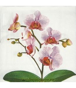 "Салфетка для декупажа IHR-201481 ""Розовая орхидея"", 33х33 см, Германия"