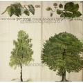 "Салфетка для декупажа IHR-310808 ""Деревья"", 33х33 см, Германия"