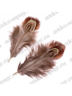 Декоративные перья фазана Коричнево-бежевые, натуральное перо, 3-9 см, Knorr prandell