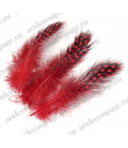 Перья цесарки карминно-красные, натуральное перо, 5 см, 20 шт., Knorr Prandell (Германия)
