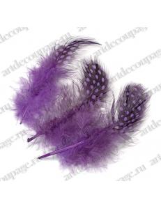 Перья цесарки фиолетовые, натуральное перо, 5 см, 20 шт., Knorr Prandell (Германия)