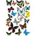 "Рисовая бумага R-A3-0058 ""Бабочки"", формат А3, ProArt (Россия)"