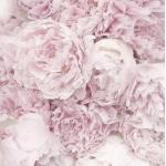 """Салфетка для декупажа SVD80060 """"Розовые пионы"""", 33х33 см, Sagen Vintage Design, Норвегия"""