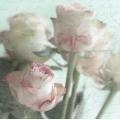 """Салфетка для декупажа SVD80075 """"Розы и текст"""", 33х33 см, Sagen Vintage Design, Норвегия"""