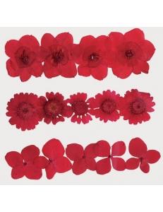 Сухоцветы для декора, набор Красный, Stamperia, CLFS09