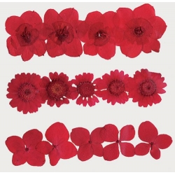 Сухоцветы для декора - букетики, цветы, листья