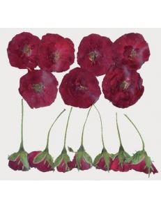 Сухоцветы для декора, набор Темно-красный, Stamperia, CLFS10