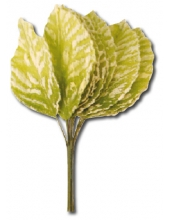 """Декоративный букет """"Листочки зеленые с белым"""", 12 штук, Stamperia (Италия)"""