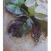 Паста для создания эффекта фрески Pasta affresco, 150 мл, Stamperia