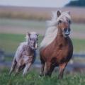 """Салфетка для декупажа """"Скачущие лошади"""", 33х33 см, Германия"""