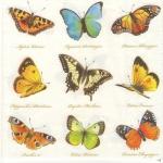 """Салфетка для декупажа HF13307160 """"Бабочки разноцветные"""", 33х33 см, Голландия"""