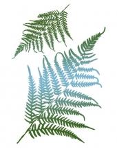 """Трафарет пластиковый KSG325 """"Листья папоротника"""", 21х29,7 см, Stamperia (Италия)"""