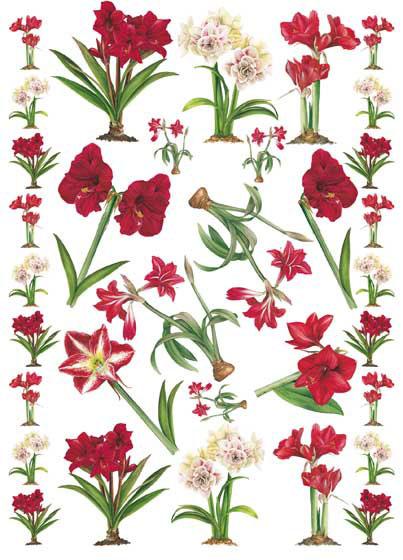 Декупажные карты Calambour EASY 141 цветы, Амарилис красный
