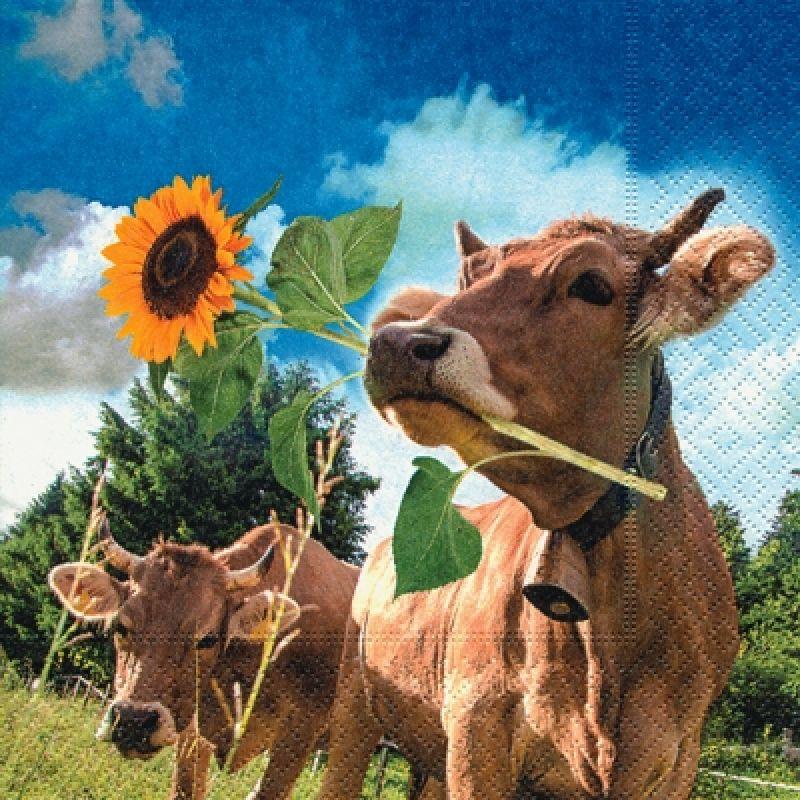 Открытка с коровой, приколы