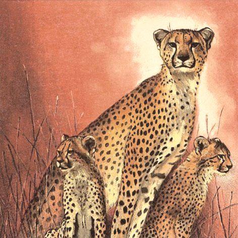 Салфетки для декупажа Африка гепарды, африканские животные, купить